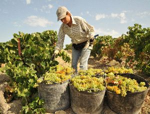 Spanish Wine - Wine Tours Jerez