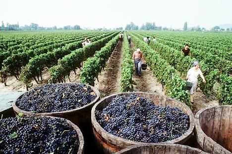 Spanish Wine at the Source: Rioja Vineyard Visits - Restless ...