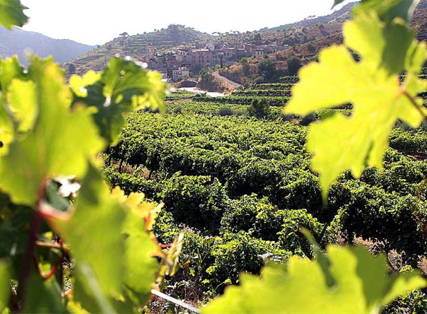 Spanish Wine - DO Priorat